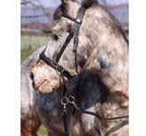 Bitless Bridle Walnut Ponny, svart